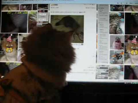 Tiffanie Cat - Watching Video