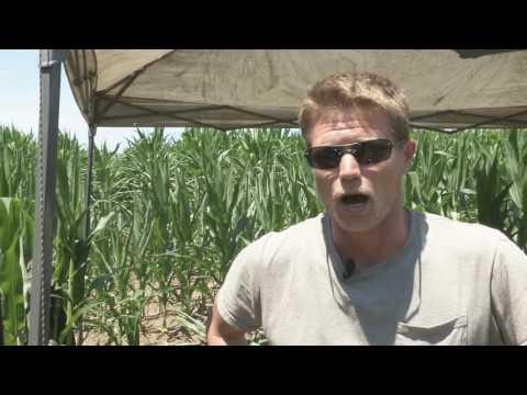 Ancient Village Found in Central Illinois Corn Field