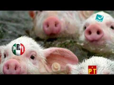 Partidos Políticos terminan por dar en la madre a los Mexican@s