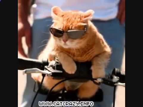 Самые смешные фото котов с надписями (20 фото)