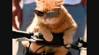 Приколы   фото кошек Смешные приколы с кошками1