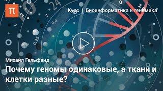 Системная биология — Михаил Гельфанд