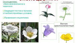 Цветок- орган семенного размножения растений.AVI