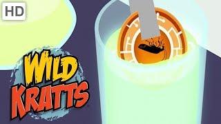 Wild Kratts 🌟 These Creatures Glow!   Kids Videos