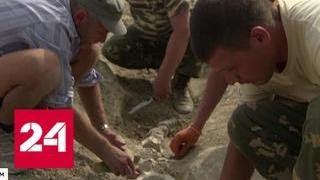 Скелет древнего кита, найденный в Крыму, стал сенсацией в научном мире - Россия 24