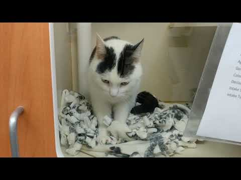 MeiMei at Fairfax County Animal Shelter