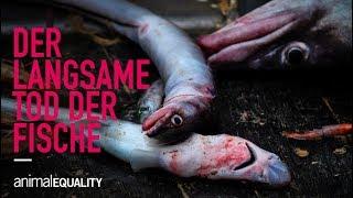 Gefangen im Netz: Der langsame Tod der Fische