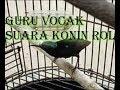 Suara Kolibri Ninja Guru Vocal Burung Kesayangan  Mp3 - Mp4 Download