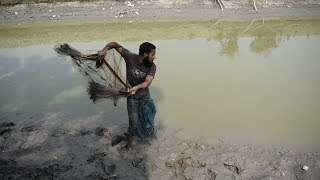 Net Fishing || Net Fishing in the village|| Catching fish with Cast net