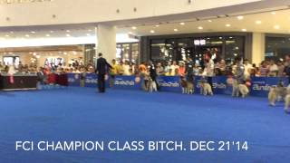 FCI: Siberian Husky BOB under judge Mr.Ben Luxton (Australia) on Dec 21