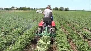 TZ-4K14 окучивание картофеля