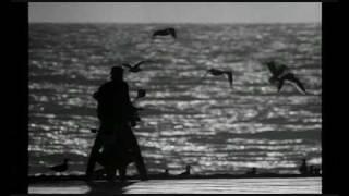 Бойцовская рыбка Финальная сцена