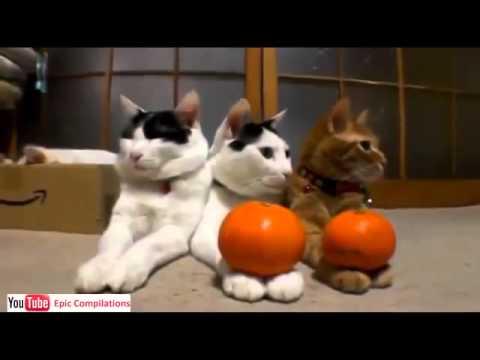 Molto youtube video divertenti gratis gatti divertenti 9 - YouTube XJ38