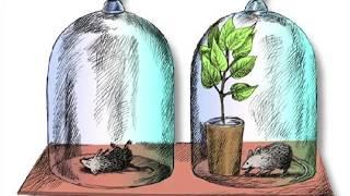 Фотосинтез. Образование глюкозы в клетках растений. Биология в живой природе.