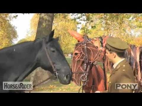 War Horse: Joey meets Household Cavalry horse Elizabeth | PONY Magazine