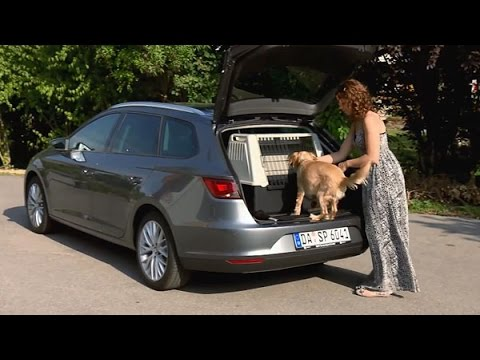 hunde im auto richtig transportieren youtube. Black Bedroom Furniture Sets. Home Design Ideas