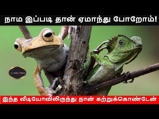 நாம இப்படி தான் ஏமாந்து போறோம்!   TamilThisai   Frog   Lizard  