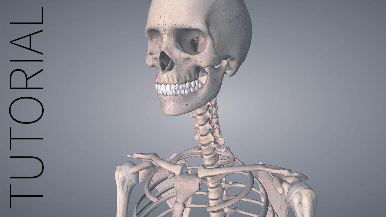 The Basics - Essential Anatomy 5 Tutorial