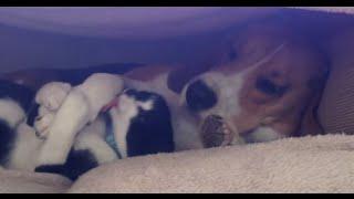 Puppy Loves Kitten - Cutest video ever