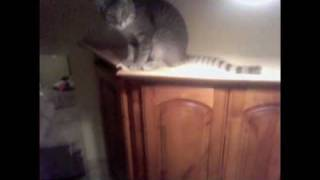Tobias chasing bugs on a cabinet