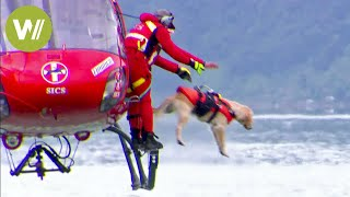 Rescue dogs jump from a helicopter to save lives