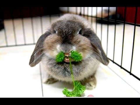 кролики приколы -
