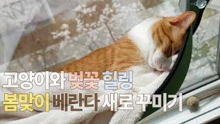 [4묘4색] 고양이와 벚꽃 힐링ㅣ봄맞이 베란다 새로 꾸…