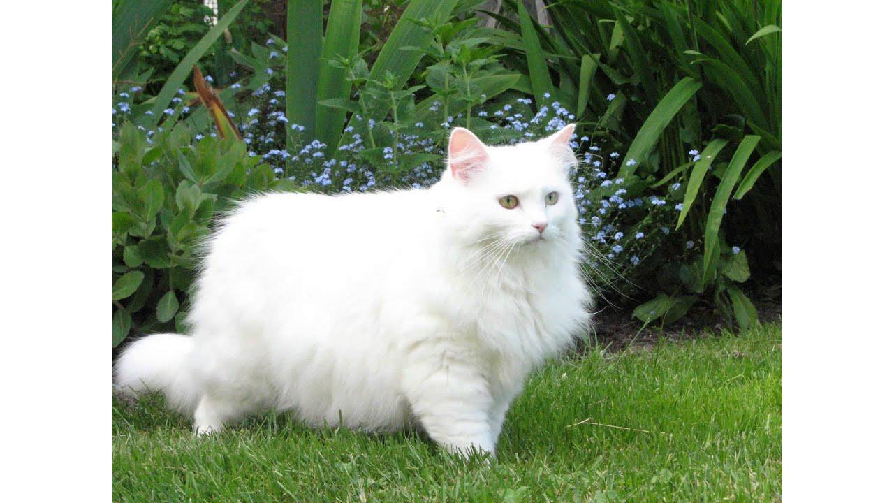 Black Cat White Movie