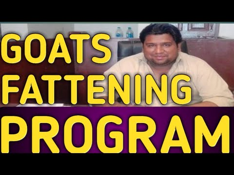 Goat Fattening Program