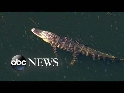 Ya Big Dog Blast - gotta be careful of the gators in FL