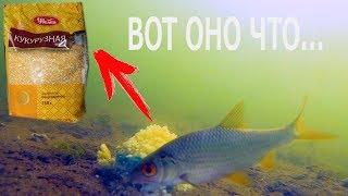 ВОТ ОНО ЧТО..Реакция рыбы на КУКУРУЗНУЮ КРУПУ!!! Подводная съемка.