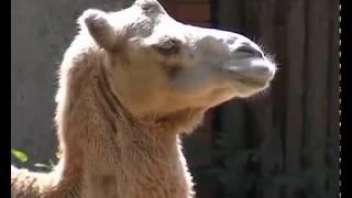 Как спасают животных Мариупольского зоопарка  от жары