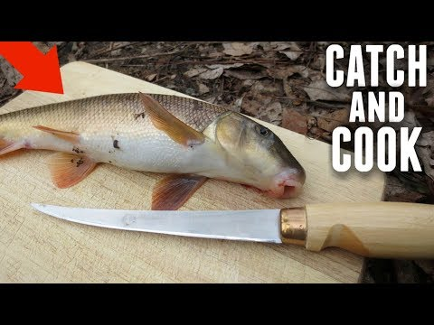 catch and cook sucker fish do they taste good youtube