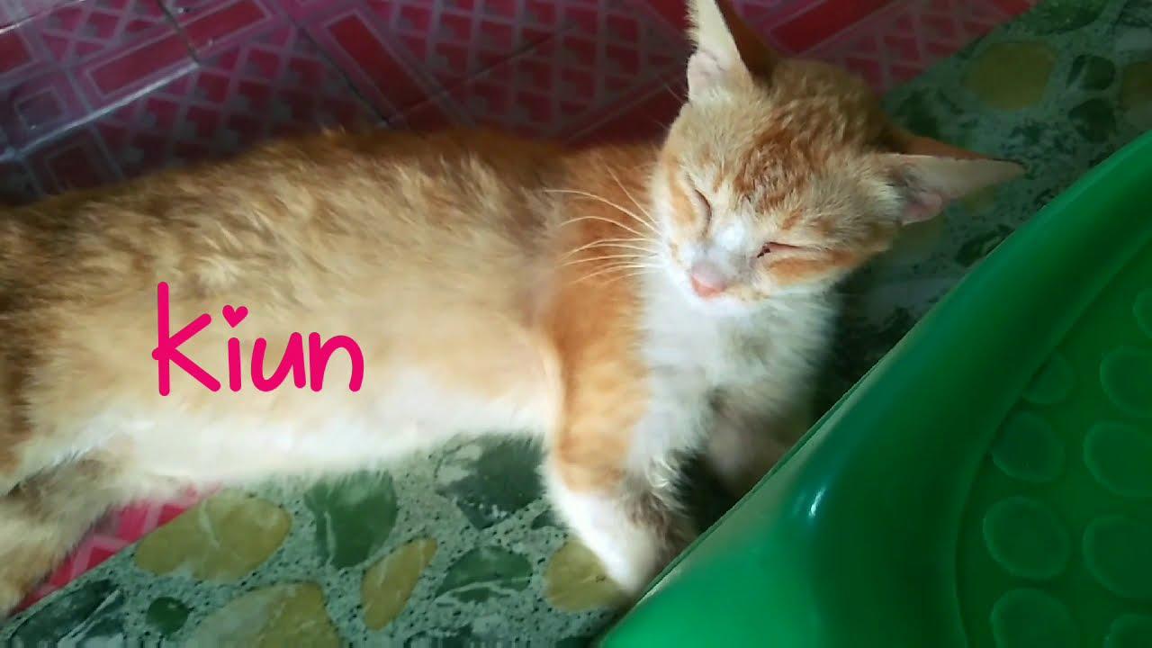 Nama Nama Kucing Saya Nama Kucing Yang Indah Dan Comel Youtube