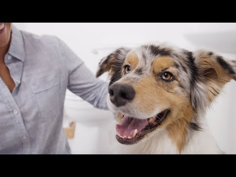 How to Brush a Dog's Teeth & Why Dog Dental Care is Important   (Petco)