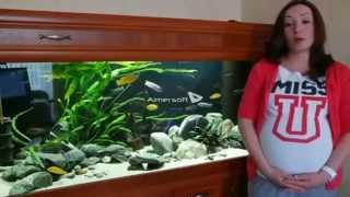 Как я лечила гексамитоз в аквариуме за три дня