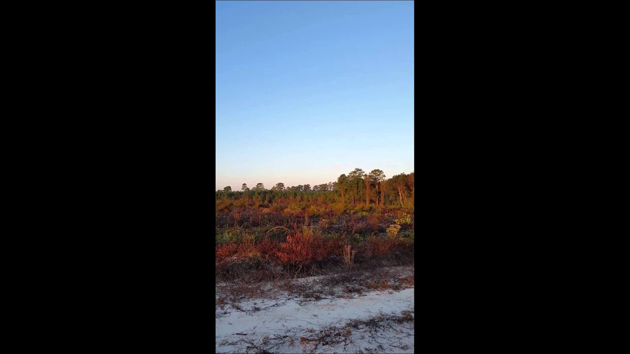 Deer hunting in south georgia with dogs youtube for Georgia out of state fishing license