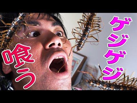 ゴキブリを食すオオゲジゲジを食べる!スペースデリバリー!