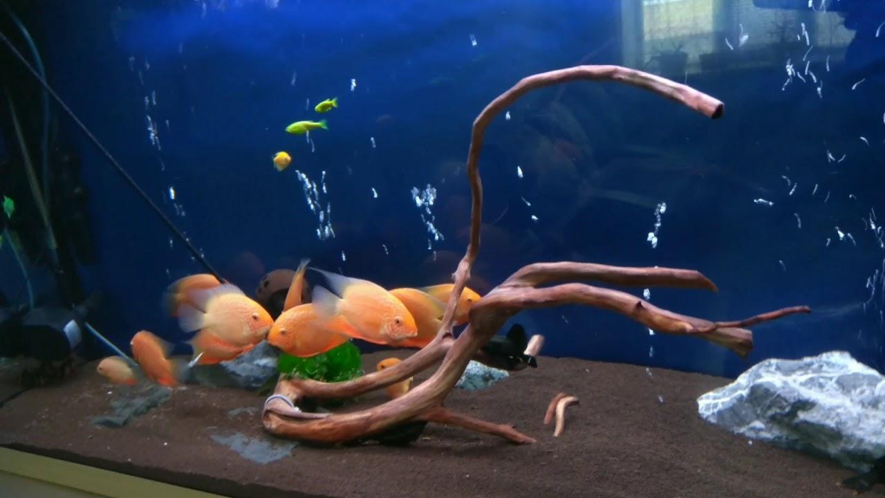 Аквариум корм своими руками фото 722