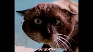 Напуганные  и злые коты )