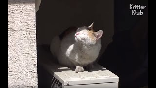Cat Pleads For Lady To Adopt Her While Waiting Outside The Window Every Day | Kritter Klub