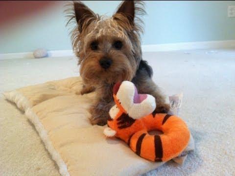 Puppy Tantrum