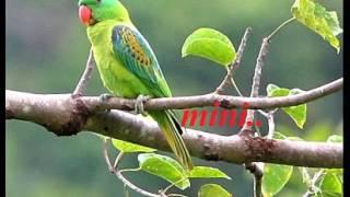 Aayiram kannumayi Kaathirunnu Ninne Njan..!!(Mini Anand)