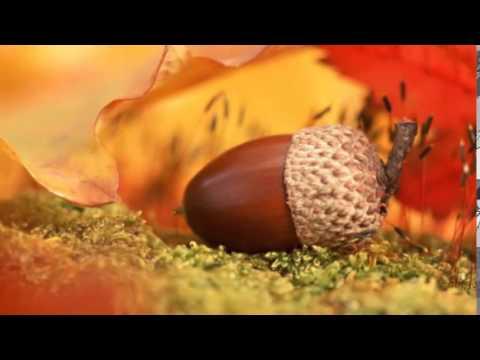 Douceur d 39 automne entr e de saison youtube - Entree d automne ...