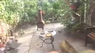 Baz's Hobbies - 18f - Blackbird Feeding Her Young On Unusual Garden Bird Table