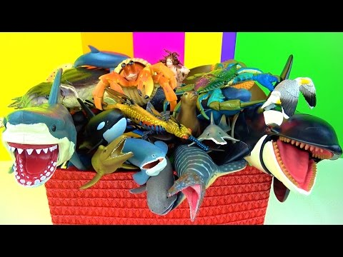 Learn about Sharks Whales Fish Sea Animals - Kids Toys - Fun Educational in English