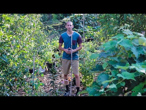 Food Forest, Sustainable Organic Gardening