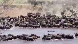 Большая миграция, переправа через реку
