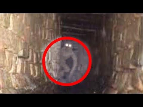 Le 5 creature più inquietanti riprese dal vivo