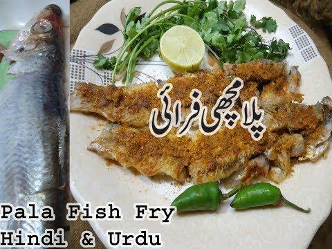 Palla Fish Fry In Hindi&Urdu